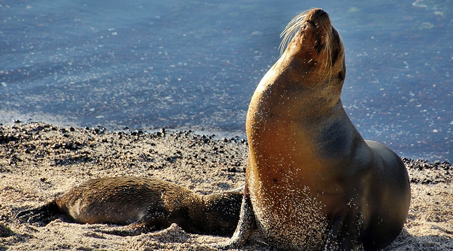 "Galapagos Islands Travelling Classroom ""The Secret of Evolution"" - 15 Days"